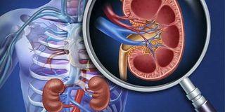 Informações introdutórias sobre o transplante renal, lecionado pelo Dr. Hélio da Silva